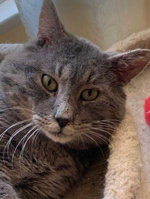 George Tabby Cat