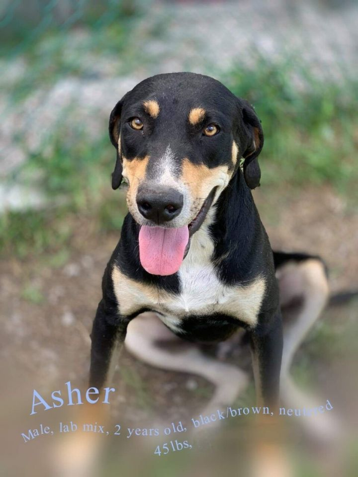 Asher 2