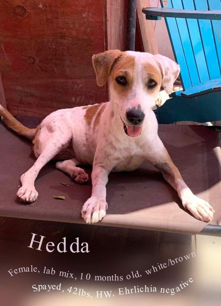 Hedda 2
