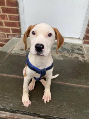 You can fill out an adoption application online on our official websiteRay AL is a male Hound mix