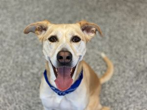 Storm is looking for a calm home where she can flourish Shes a 3-year-old Retriever mix and is tre