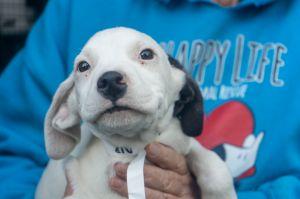 9 pups white pups brown pups male pups female pups come meet the Dr Seuss litt