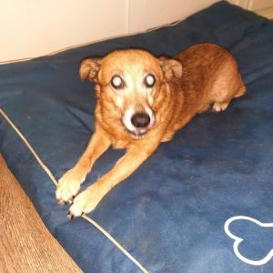 Hi - My name is Sera I am a senior girl and weigh about 20 lbs I am blind or
