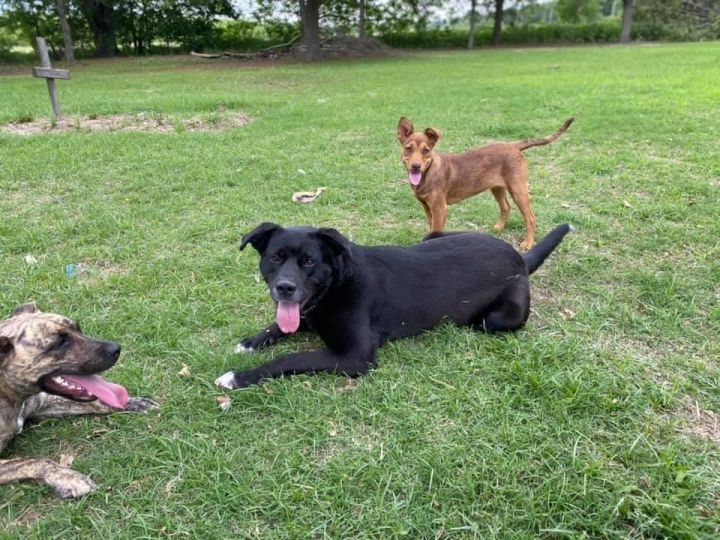 Stella-Fostered in CT 5