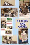Angel & Katniss