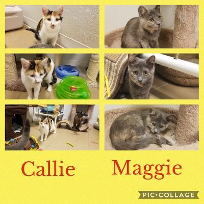 Callie & Maggie 1