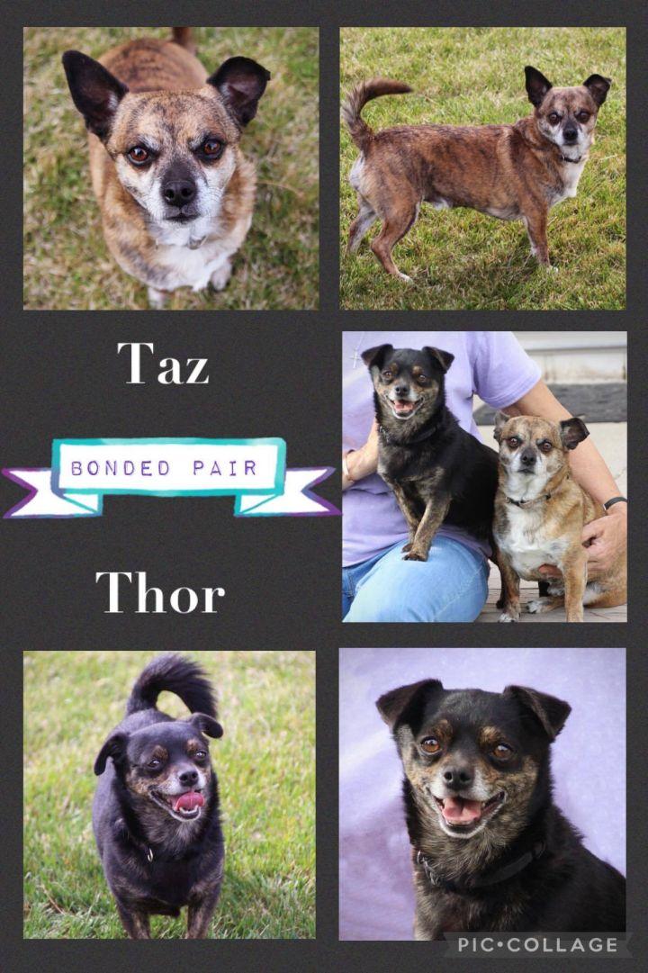 Taz and Thor 1