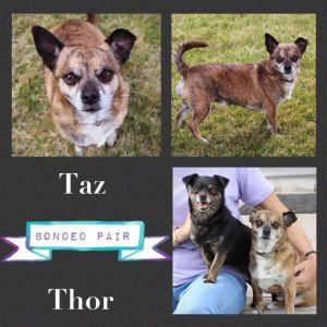 Taz and Thor