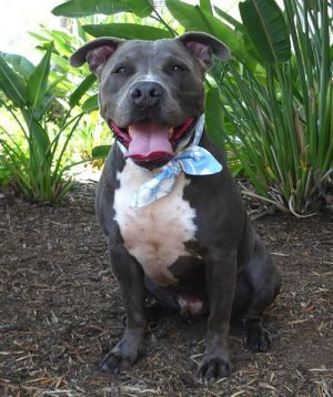 RUSSELL Mixed Breed Dog