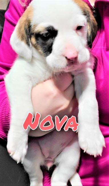 Nova - Brooke 1