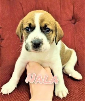 Nala - Brooke