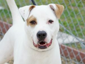 Monty is a super smart pup that knows a bunch of commands Hes house trained and adores his person