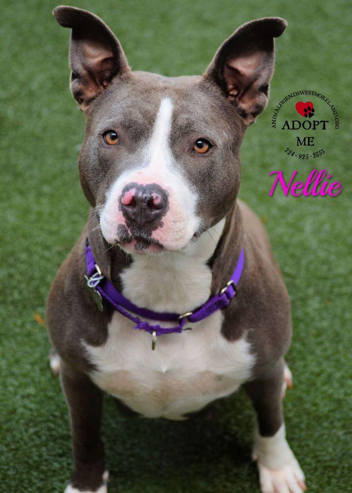 Nellie 2