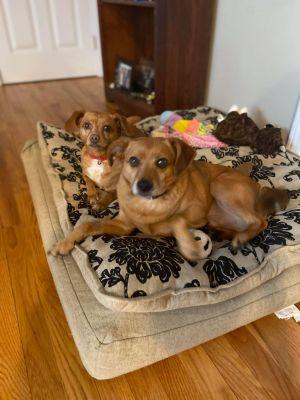 Photo of Precious and Wally