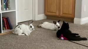 SCRUFFLES AND SKITTLES WERE FOUND ABANDONED IN FRONT OF A CHURCH THE DAY BEFORE EASTER THEY WERE CL