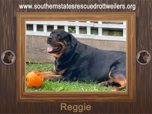 Reggie came to us from Tennessee and quickly fit in to Texas life Reggie loves his people and alwa