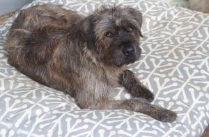 Mitzi Jean is approx 2 yrs old and 35 lbs she is a very sweet dog that had a rough