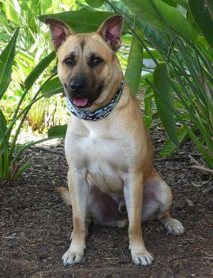 BAILEY Mixed Breed Dog