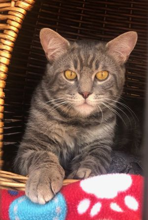 Cole was abandonded with his brother Tigger when their owner was evicted from her apartment We bele
