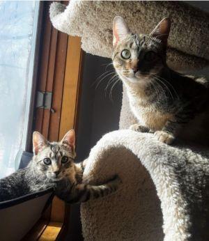 Tabitha and Sam