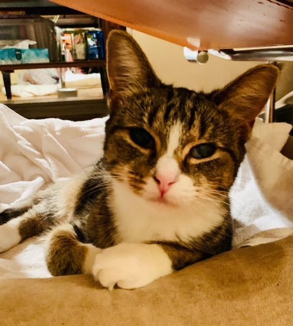 Bocella Minnie Squeakerton NYC kitty