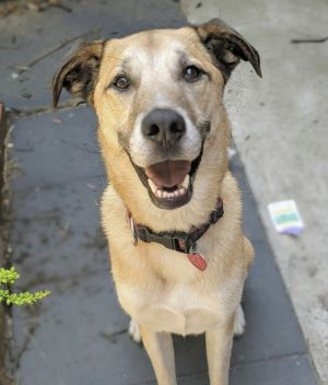 Tuck is super cute very sweet and hell be a great dog for the right person A devilishly handsome
