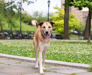 Tuck Collie Dog