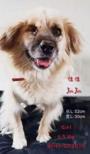 Jia Jia was formerly a stray dog and was found bruised because people would beat her up searching fo
