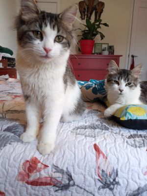 Meet Riley and Blake They are a pair of sweet sisters approximately 7 months old They are affecti