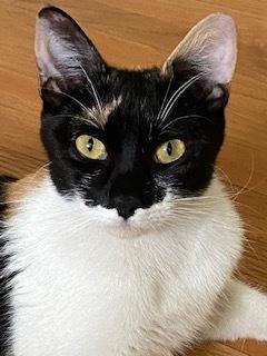 Fern Calico Cat