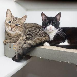 Tito & Simon