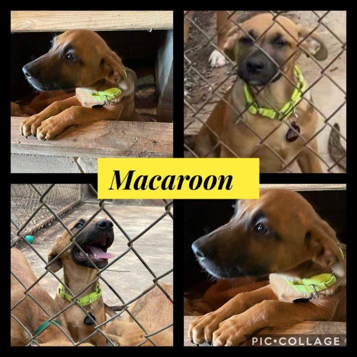 Macaroon 2