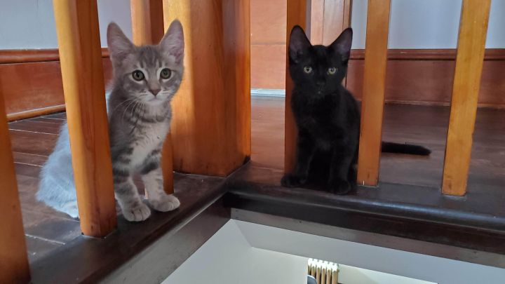 Mike & Molly (Bonded Pair) - Pending Adoption 2