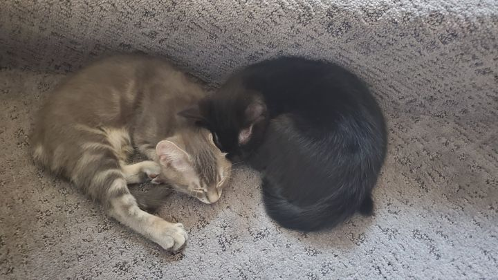 Mike & Molly (Bonded Pair) - Pending Adoption 5