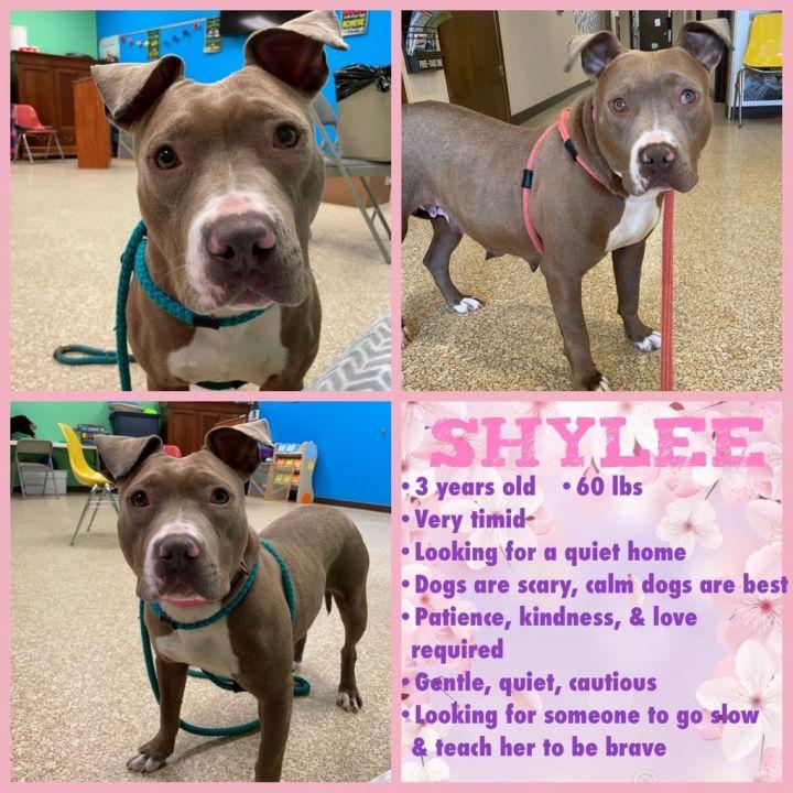 Shylee 4