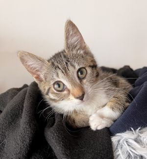 Siblings are Cherry  Blueberry Her estimated date of birth is 3721 Medical history  spayed
