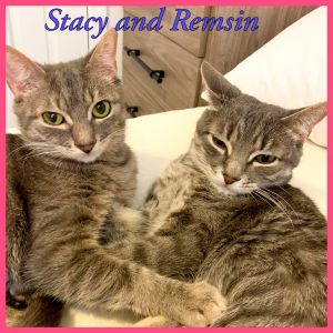 Remsin and Stacy are two extremely sweet bonded sisters looking for their forever home together The
