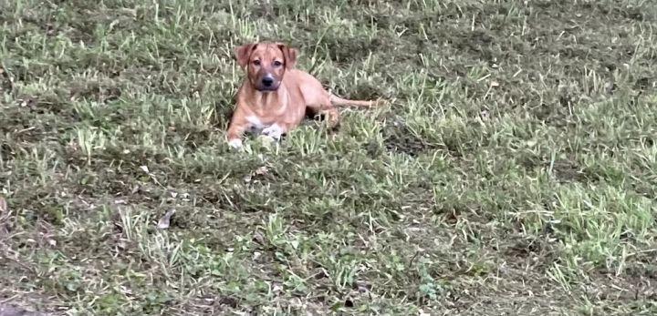 Bristol, sweet and cuddly puppy! 2