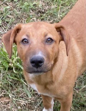 Bristol, sweet and cuddly puppy!