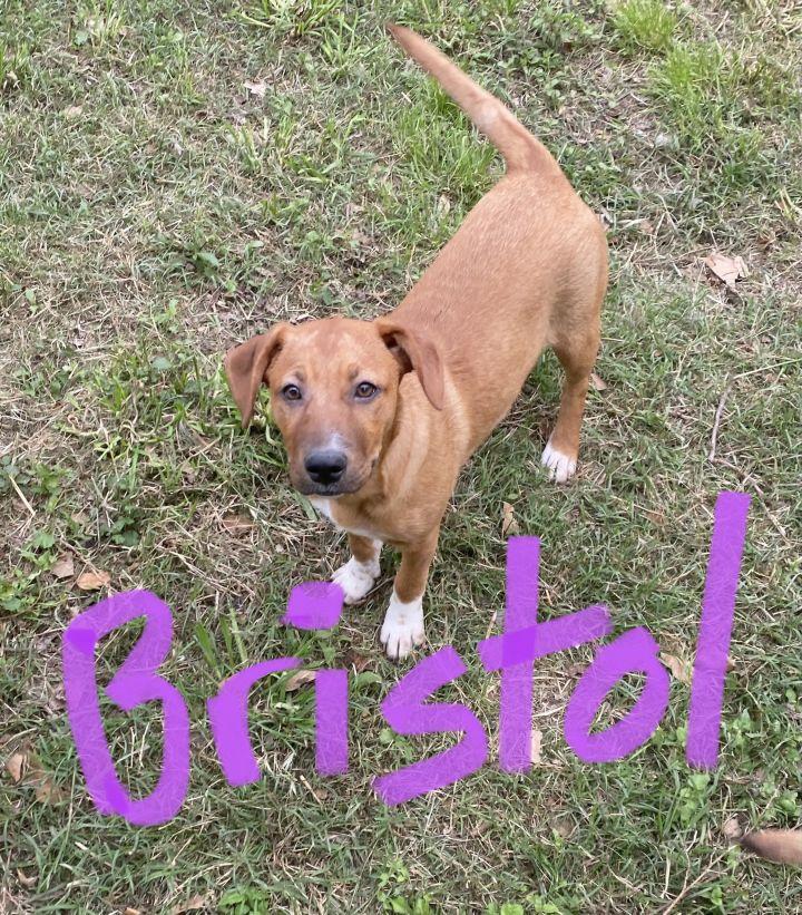 Bristol, sweet and cuddly puppy! 3