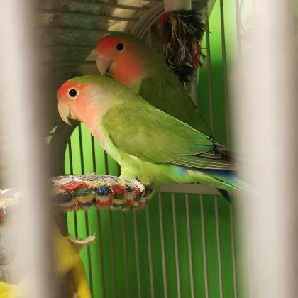 Peaches and Kiwi 1