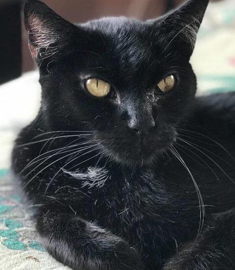Blackie 4