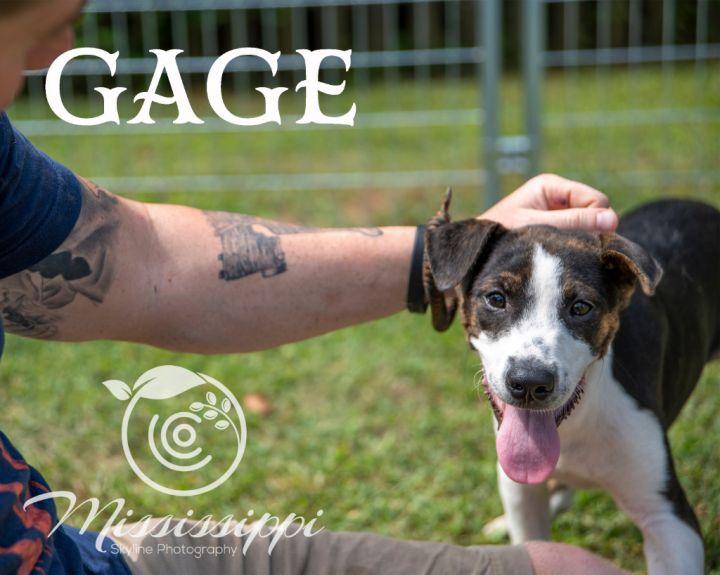 Gage 5