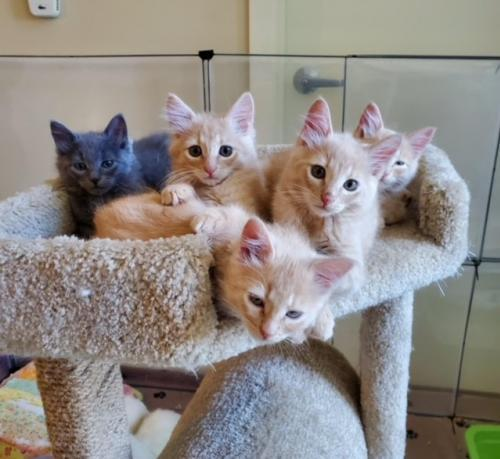 Audioslave kittens (available in pairs) 1