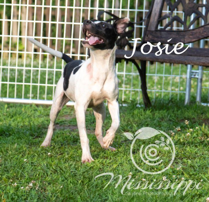 Josie 1