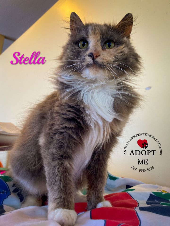 Stella 1