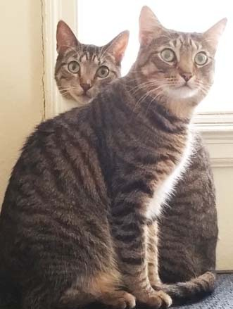 Benny & Hunter 1