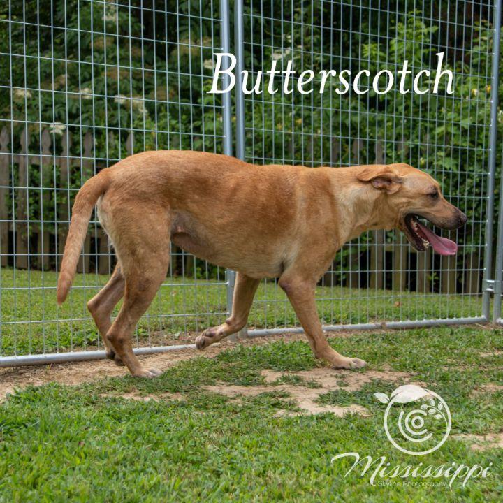 Butterscotch 5
