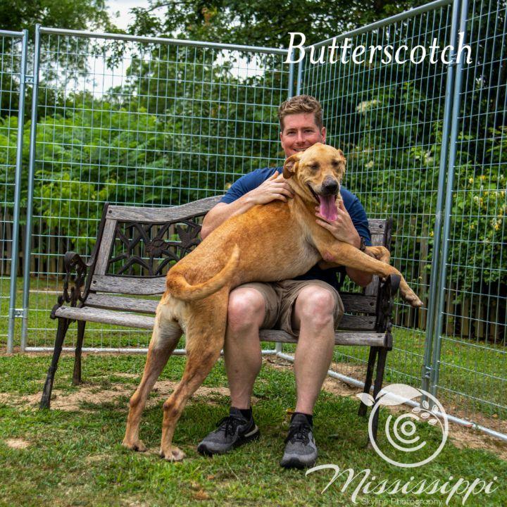 Butterscotch 6
