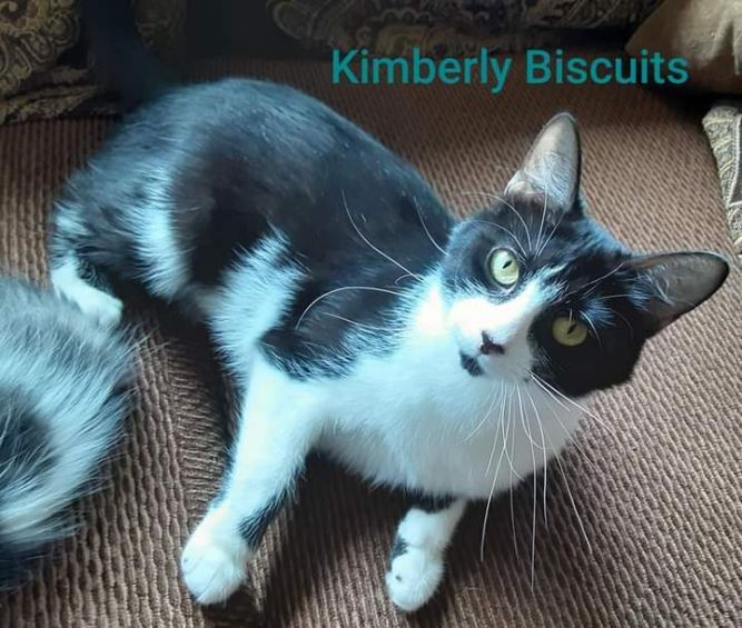Kimberly Biscuits A-3158